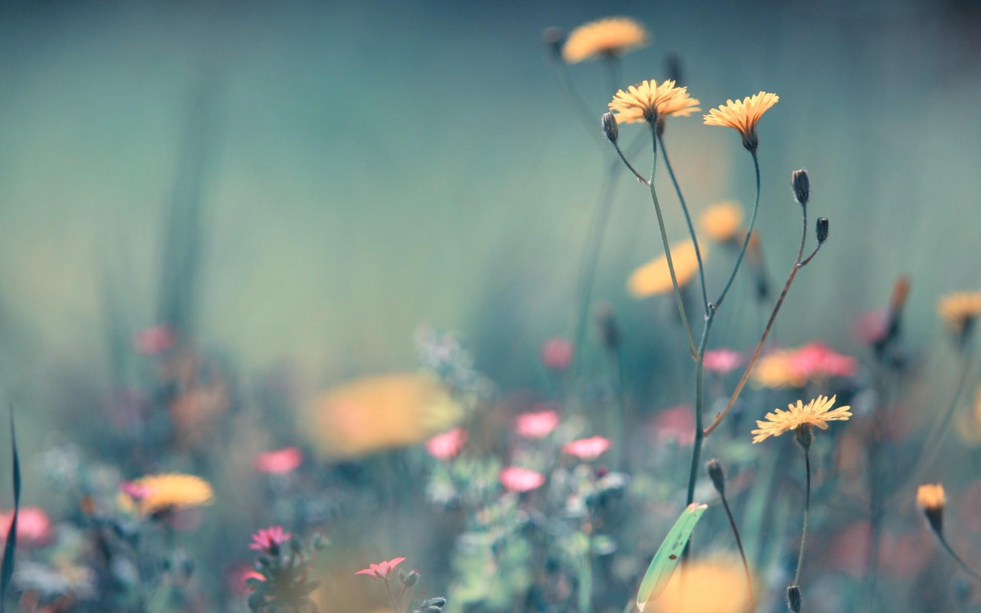 Цветы минимализм