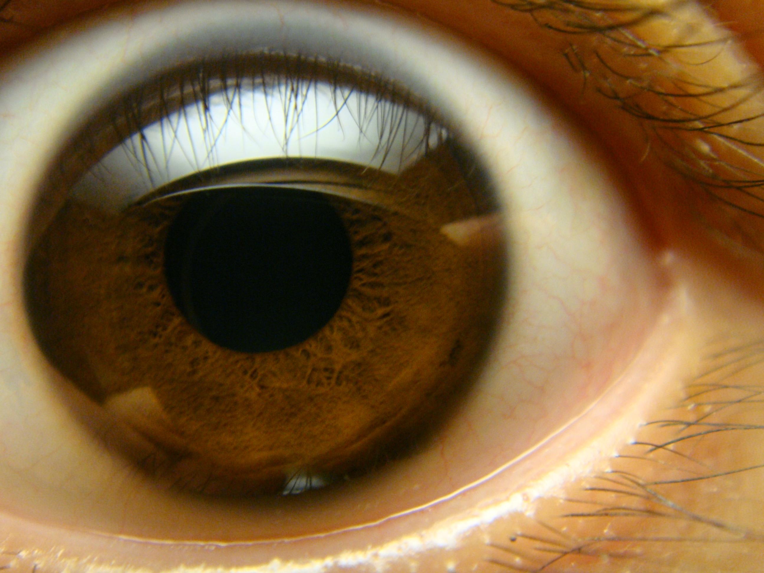 Фото глаз на аву карие