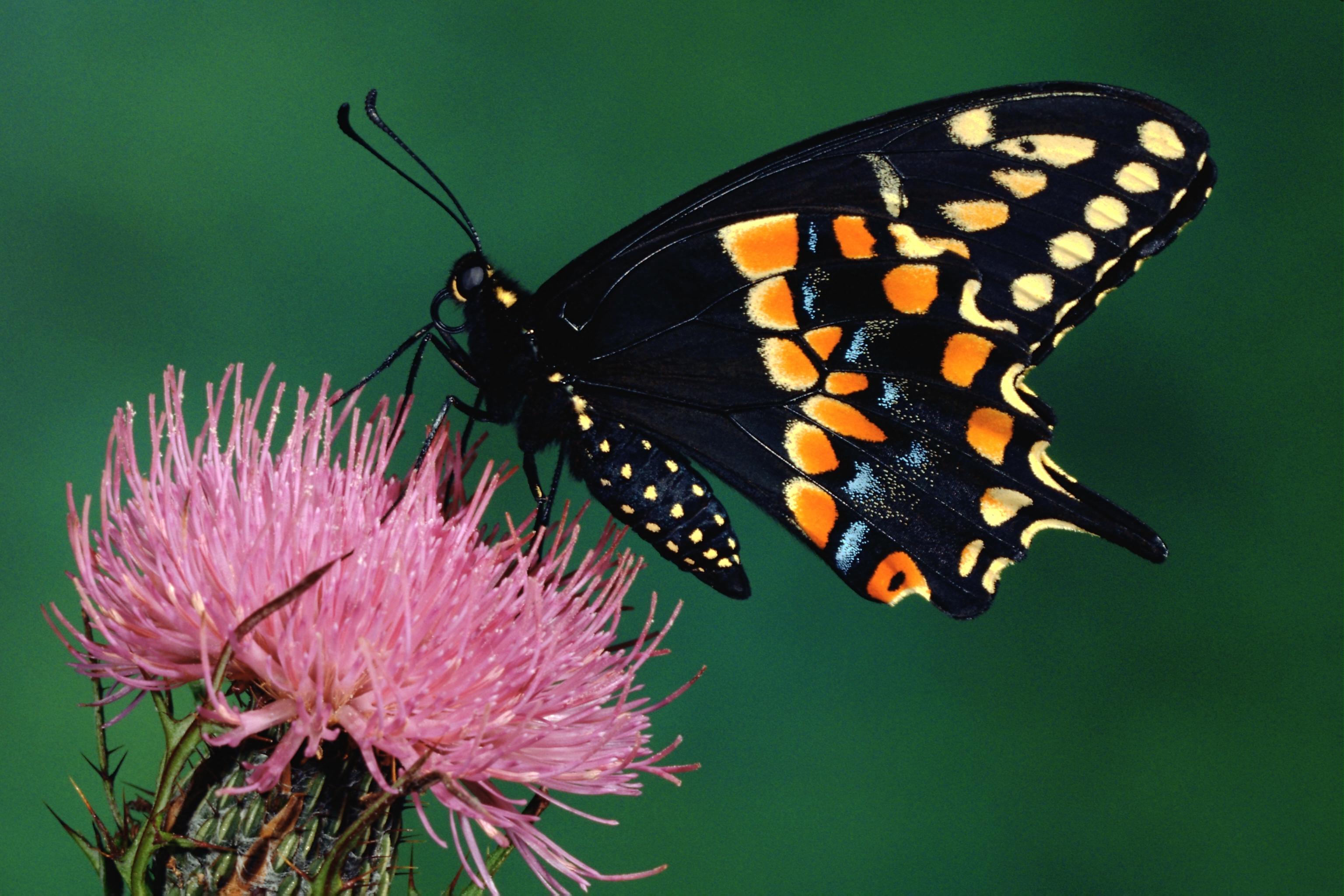 Животные и насекомые картинки 6