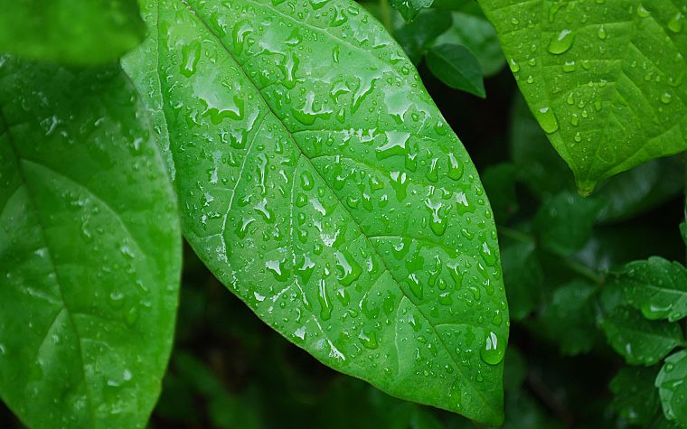 green, nature, leaves, wet, plants, water drops, macro - desktop wallpaper