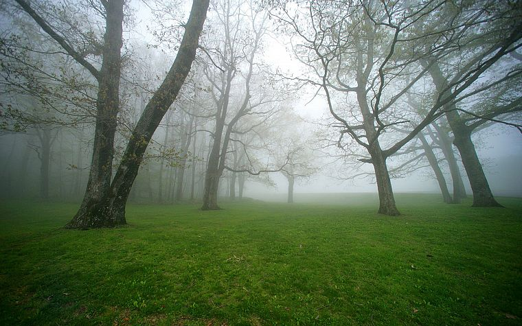 green, nature, trees, grass, fields, fog, mist - desktop wallpaper