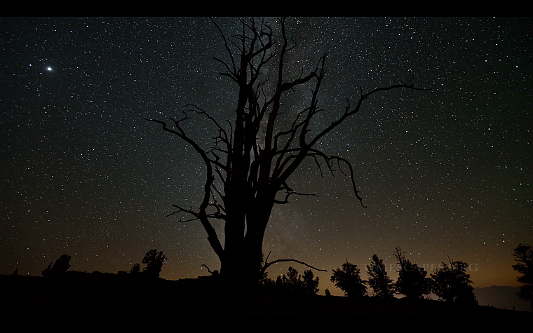 trees, night, stars, silhouettes, skyscapes - desktop wallpaper