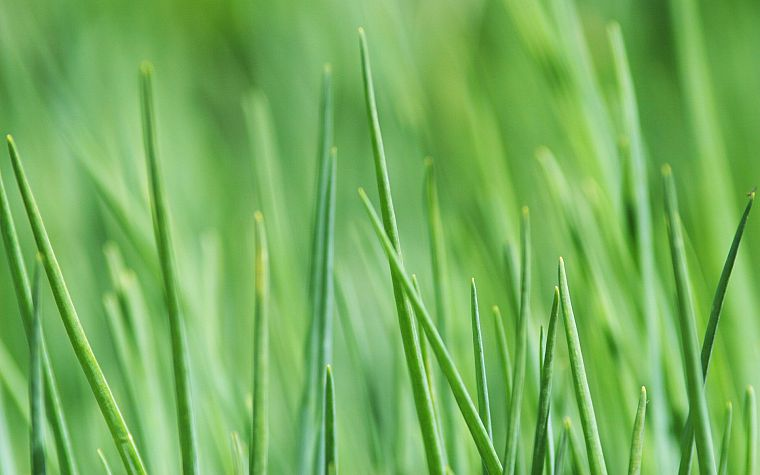 green, nature, grass - desktop wallpaper