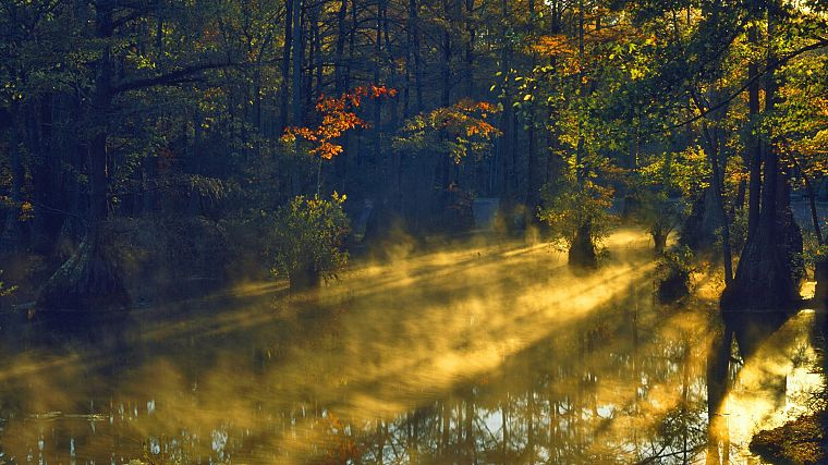 sunrise, forests, sunlight, swamp, parks, cypress, North Carolina - desktop wallpaper