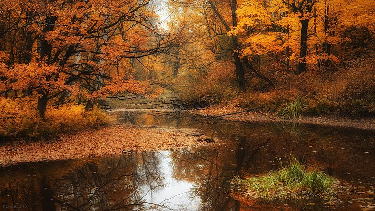 water, landscapes, nature, trees, autumn, forests, rivers - desktop wallpaper