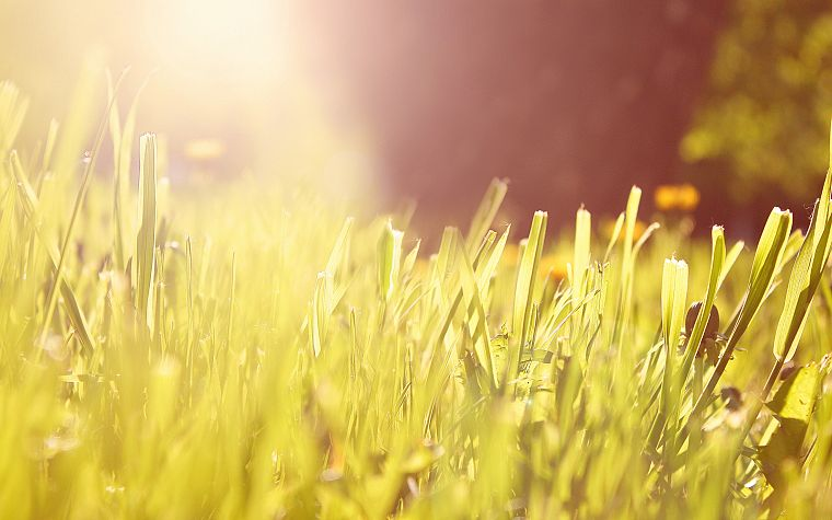 nature, grass, macro - desktop wallpaper