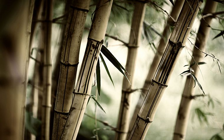 nature, forests, leaves, bamboo, plants - desktop wallpaper