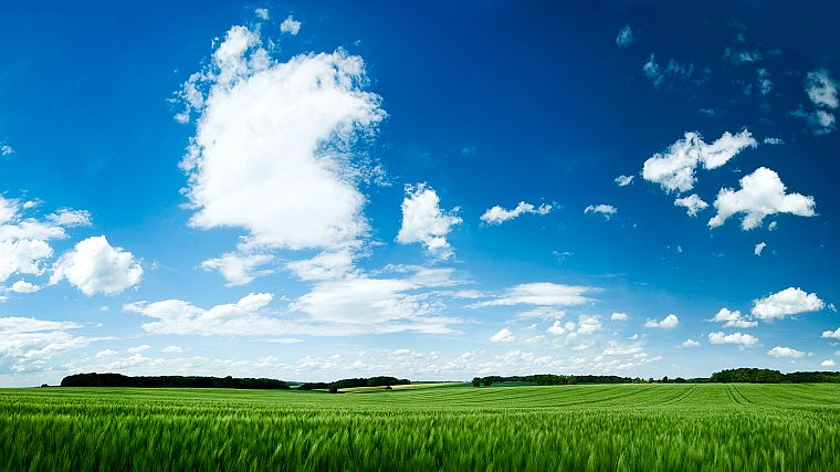 nature, grass, skyscapes, blue skies - desktop wallpaper