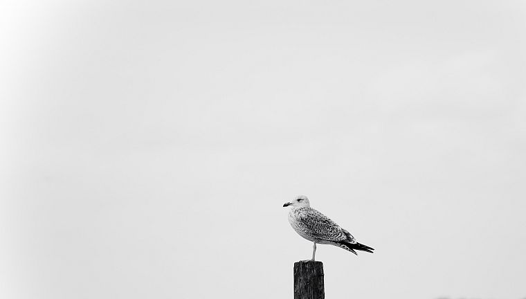 minimalistic, birds, grayscale, monochrome - desktop wallpaper