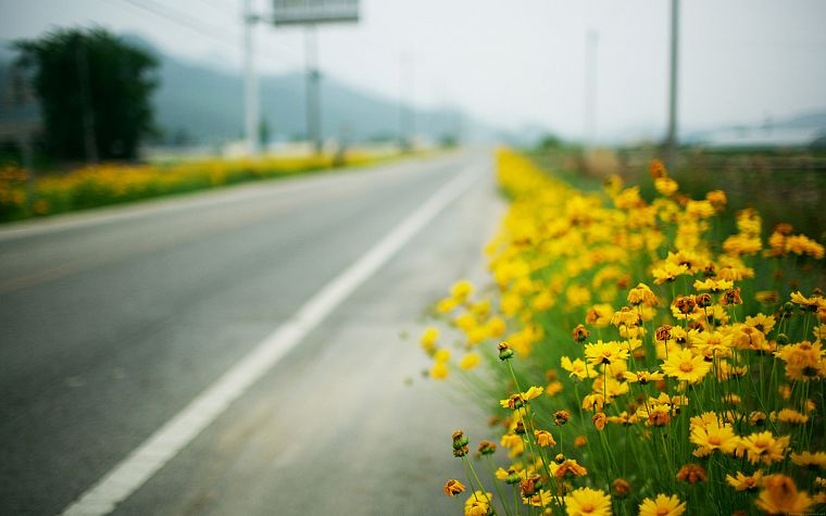 landscapes, flowers, roads, depth of field, yellow flowers - desktop wallpaper