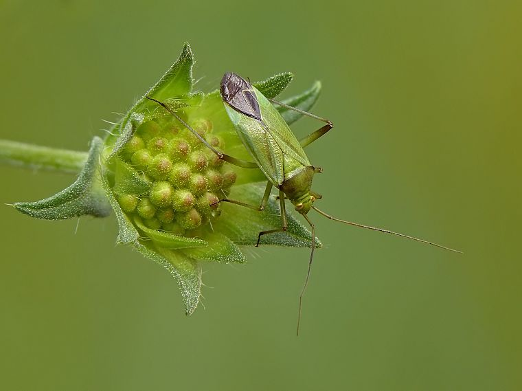 green, animals, insects, leaves, beetles, Shield Bug, depth of field - desktop wallpaper