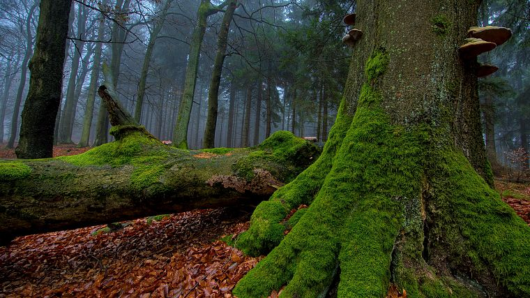 nature, trees, forests, leaves, woods, moss, logs - desktop wallpaper