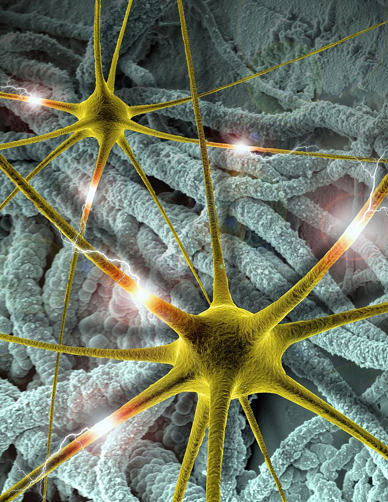 Brain neuron wallpaper