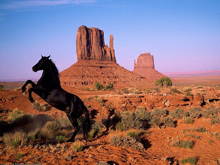 landscapes, animals, horses - desktop wallpaper
