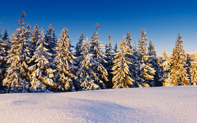 landscapes, nature, winter, snow, trees, snow landscapes - desktop wallpaper
