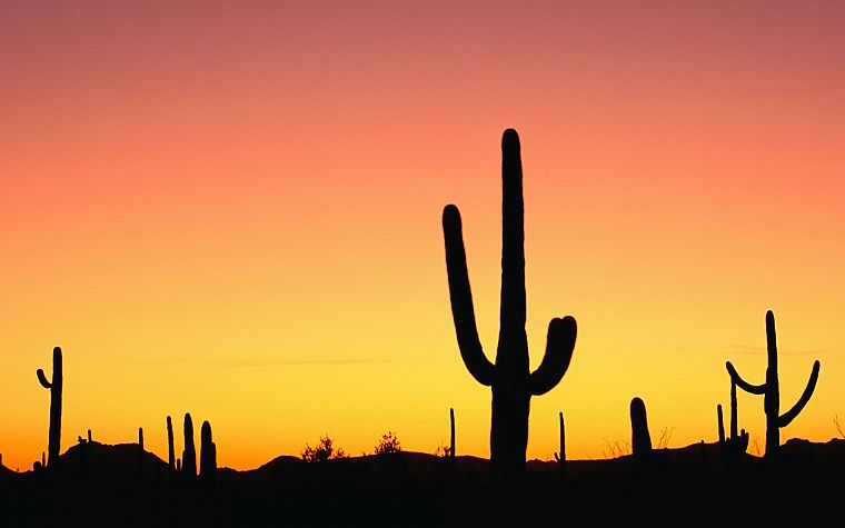 sunset, nature, deserts, silhouettes, cactus - desktop wallpaper