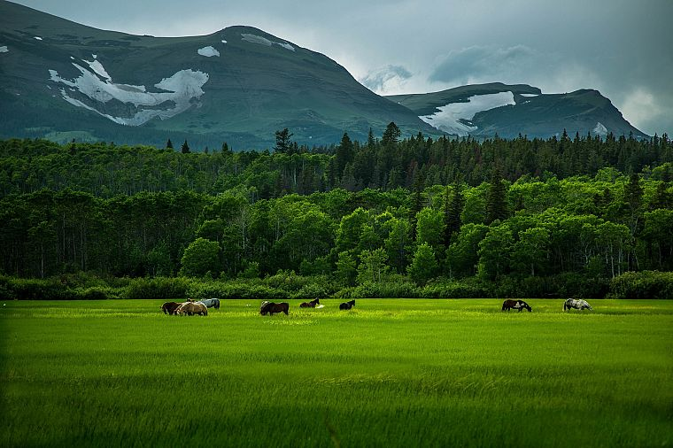 landscapes, nature, forests, horses, Mount - desktop wallpaper