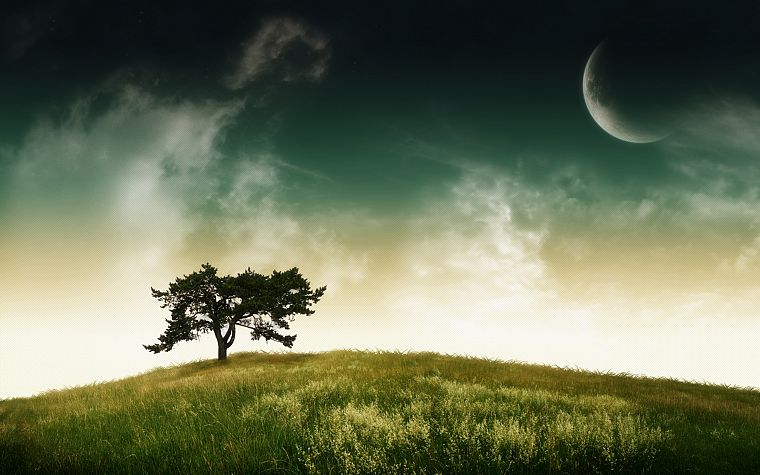 landscapes, nature, trees, planets - desktop wallpaper