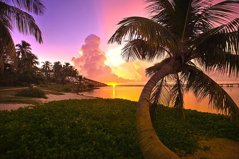 sunset, landscapes, trees, Florida, palm trees, sea - desktop wallpaper