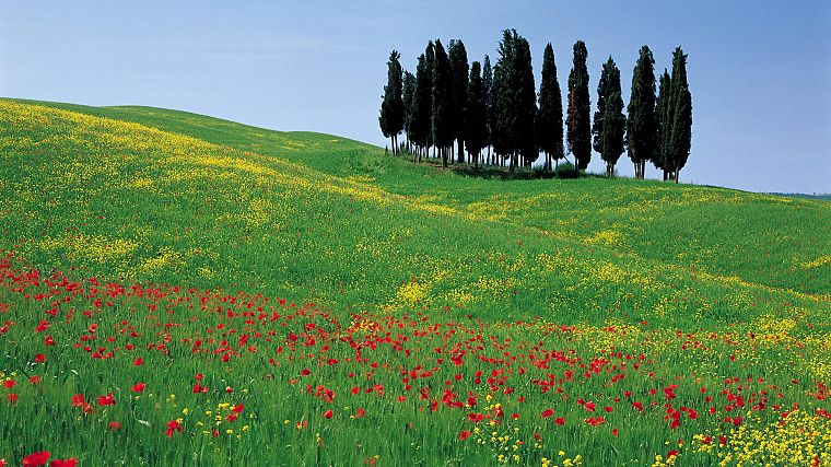 flowers, Italy, poppy - desktop wallpaper