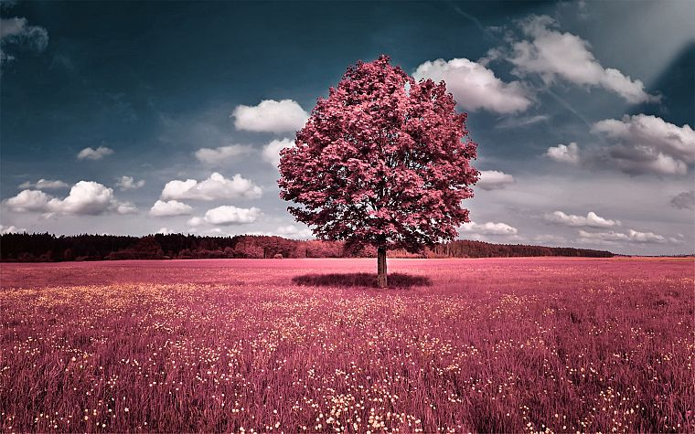 clouds, landscapes, trees, flowers, pink, grass, fields, hills, skyscapes, photo manipulations - desktop wallpaper