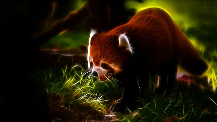 animals, Fractalius, red pandas - desktop wallpaper