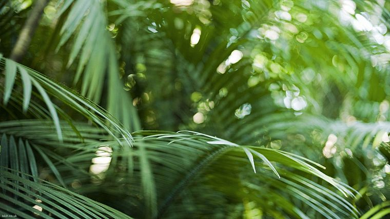 close-up, nature, bokeh, rainforest, palm leaves - desktop wallpaper
