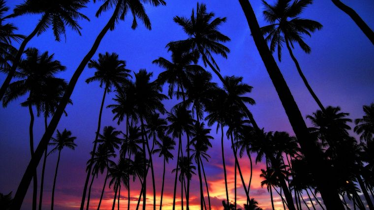 sunset, palm trees - desktop wallpaper