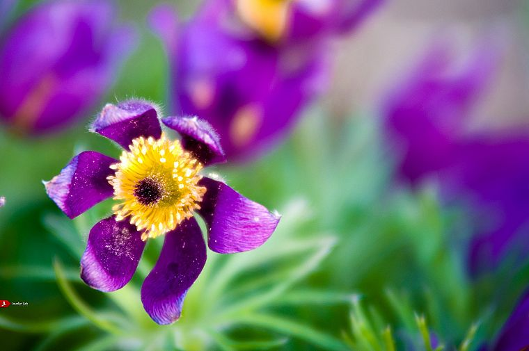 green, flowers, bloom, macro, purple flowers - desktop wallpaper