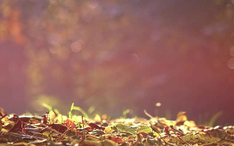 nature, leaves, macro - desktop wallpaper