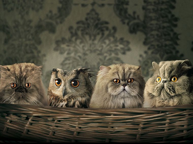 artistic, cats, animals, owls - desktop wallpaper