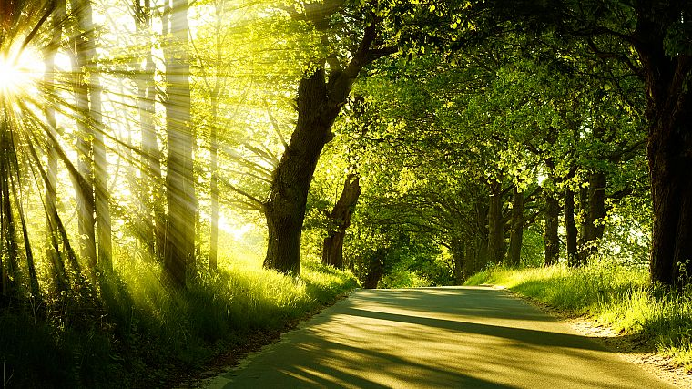 landscapes, nature, trees, sunlight, roads - desktop wallpaper
