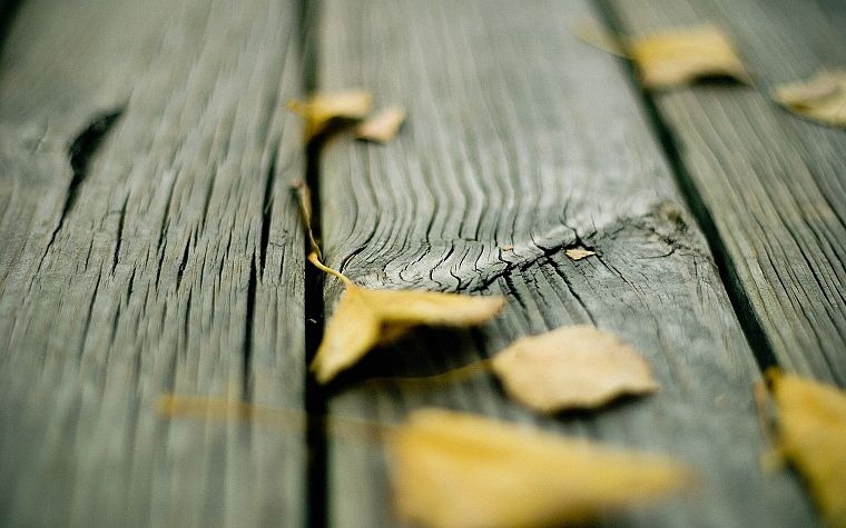 wood, leaves, fallen leaves - desktop wallpaper