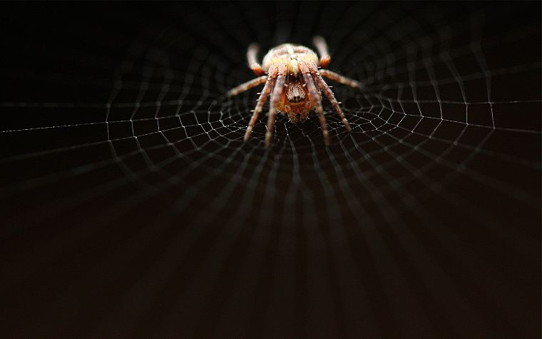 nature, insects, hunter, spiders - desktop wallpaper