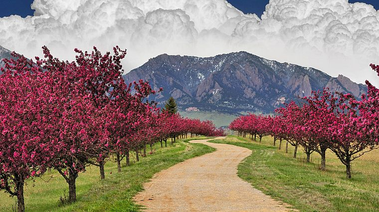mountains, clouds, cherry blossoms, trees, spring, trail, Colorado, boulder - desktop wallpaper
