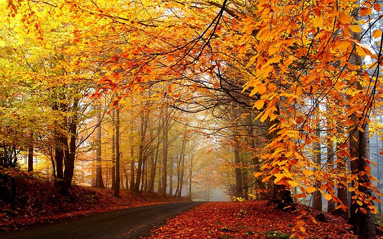 nature, trees, autumn, forests, roads - desktop wallpaper