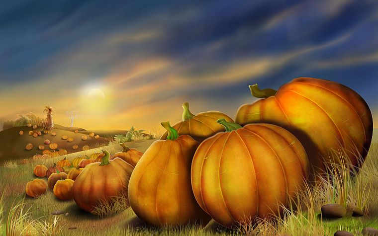nature, pumpkins - desktop wallpaper