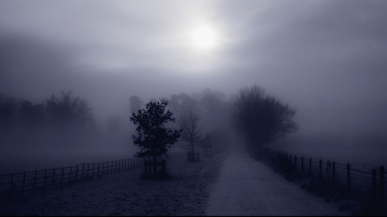 trees, fog, Country, roads, monochrome - desktop wallpaper