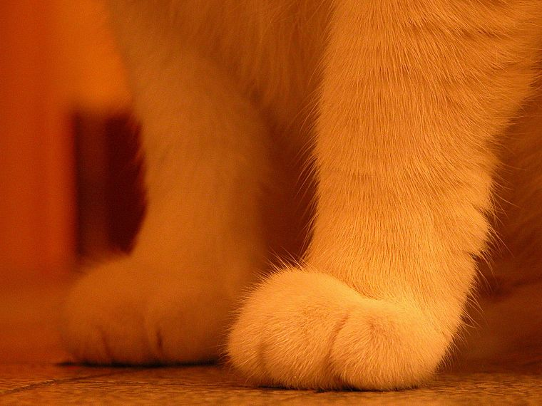 cats, animals, paws - desktop wallpaper