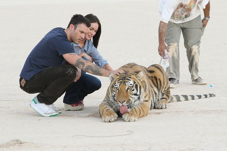 women, Megan Fox, tigers, celebrity, couple, Brian Austin Green, married - desktop wallpaper