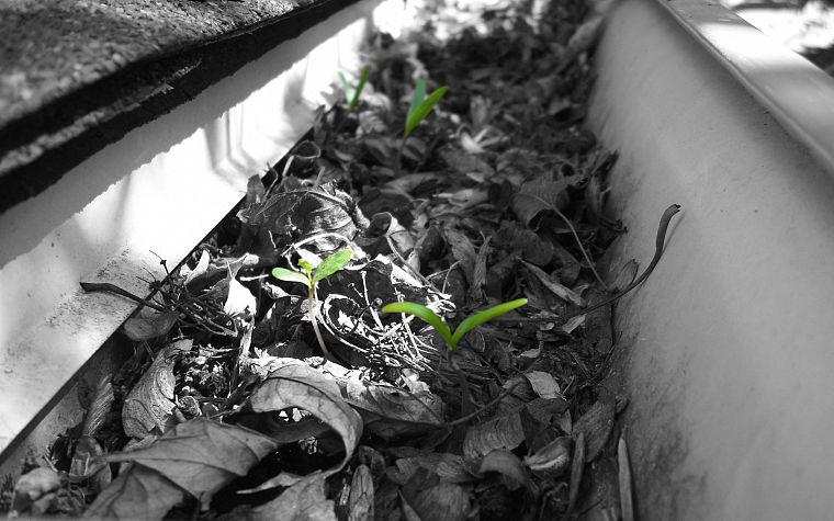 green, leaves, plants, selective coloring - desktop wallpaper