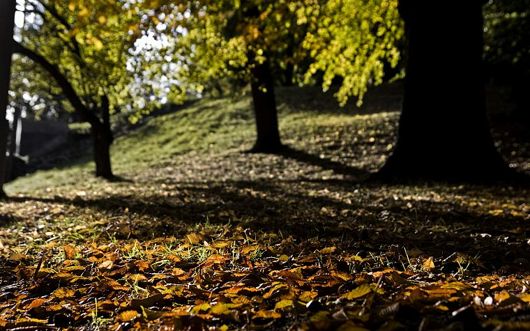landscapes, trees, bokeh, depth of field, fallen leaves - desktop wallpaper