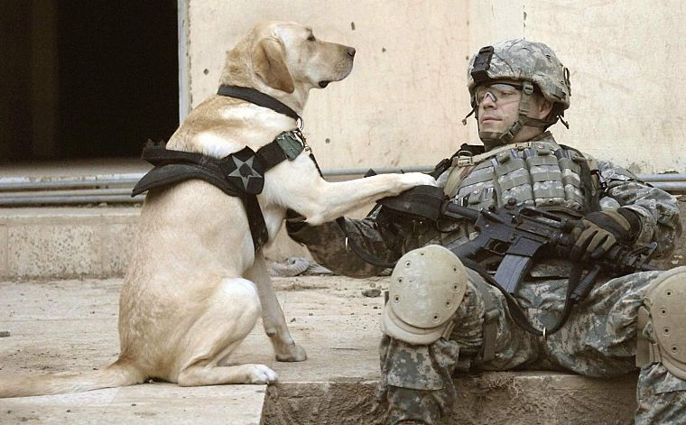 soldiers, army, military, animals, dogs, men - desktop wallpaper