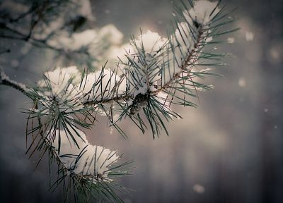 nature, winter, snow, trees, branches - desktop wallpaper