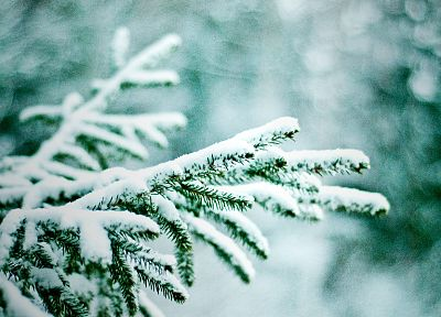 nature, winter, snow, trees, bokeh, pine trees - random desktop wallpaper