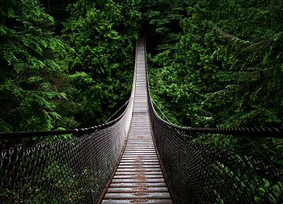 green, nature, trees, forests, paths, bridges - desktop wallpaper