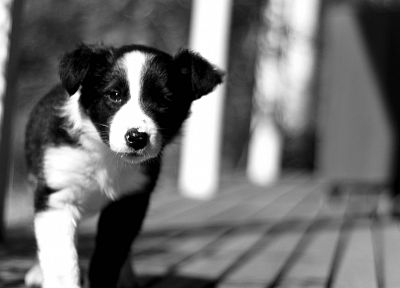 animals, dogs, puppies, grayscale, monochrome - related desktop wallpaper