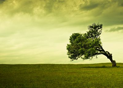 clouds, landscapes, nature, trees, fields, winds - related desktop wallpaper