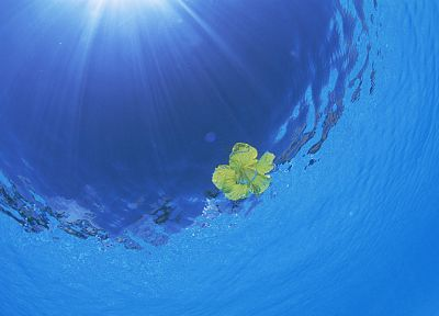 water, sunlight, yellow flowers, sea - desktop wallpaper