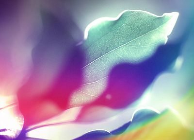 abstract, multicolor, leaves, design, backgrounds - desktop wallpaper